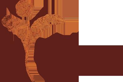 Mindful Leven Marieke Lampe